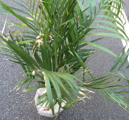 観葉植物の回収
